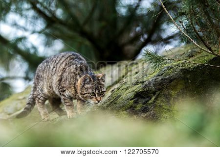 Cat Baby Playing Outdoor