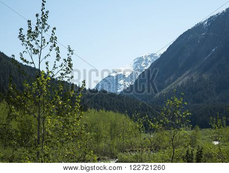 View of mountains and forests near Skagway, Alaska