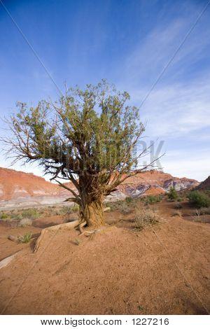 Little Tree On The Lone Prairie