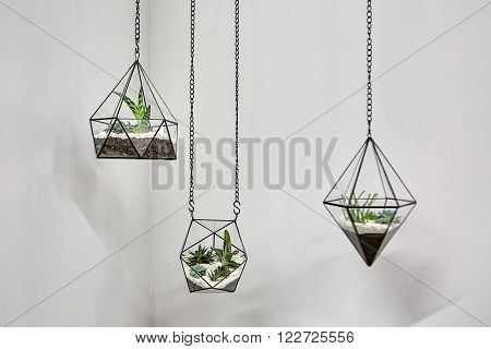 Three glass vases with metallic frames. The vases are hanging on chains on the gray wall background. Inside vases there are plants, ground and pebbles. Close-up photo. Horizontal.