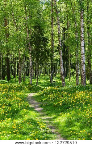 The path leading into spring forest.  Spring background
