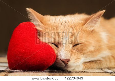 Red cute fluffy cat close up asleep clinging to the soft plush heart toy