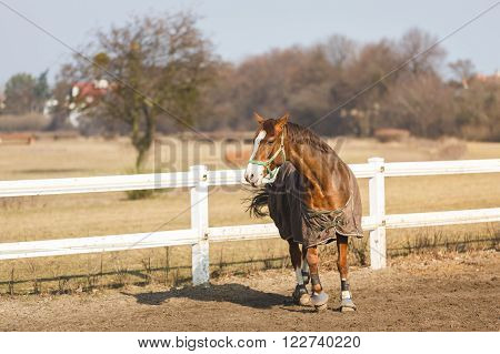 Horse in manege at spring sunny day outdoor