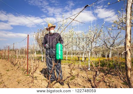 Farmer sprays his vineyard. He is wearing protective equipment.