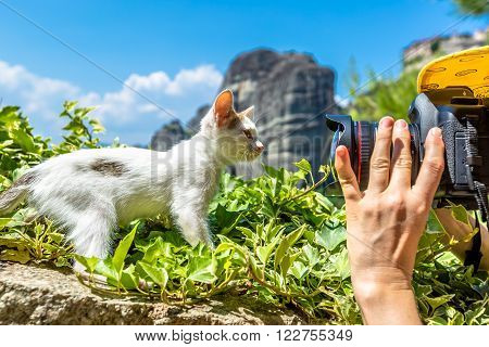 Close up of a camera while shot of a sweet, cute white kitten standing on the grass at Meteora Monasteries, Kalambaka, Central Greece.