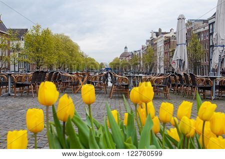 Amsterdam cityscape with tulips and outside cafe on the background the Netherlands.