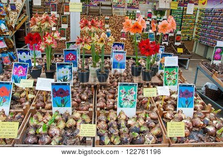 AMSTERDAM-APRIL 28: The bulbs of houseplants on the Amsterdam Flower Market on April 282015 the Netherlands.The Flower market is one of Amsterdam most colourful attractions.
