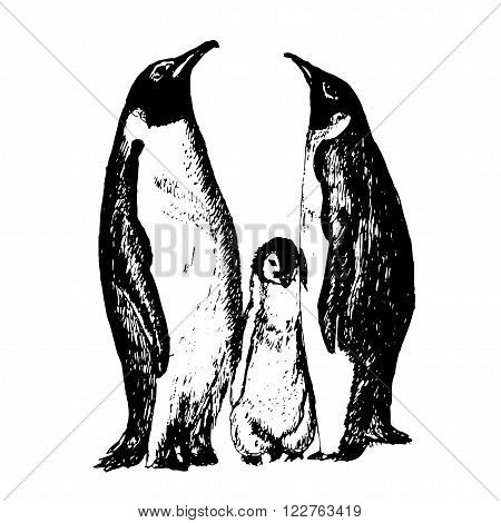 family of penguins with fledgling sketch ink hand drawn vector illustration