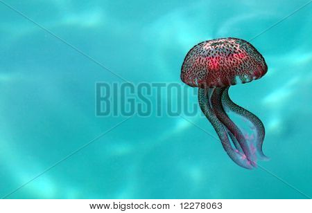 Jellyfish (pelagia Noctiluca) Swimming In Abstract Water