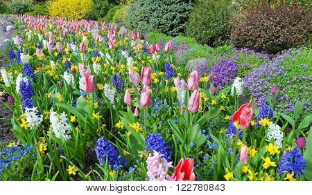 Spring Garden Lush green and Colorful flower bed, Victoria, Canada