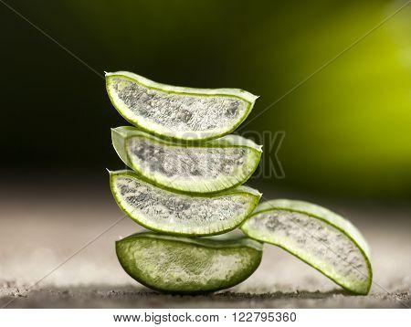 Aloe vera leaves on green tropical background