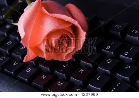 Rose On Computer Keyboard