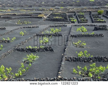 the vulcano Island of Lanzarote in spain