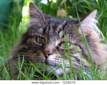 Tia, Cat Hiding In The Grass