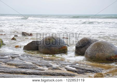 Unique Moeraki Boulders in Koekohe Beach, Otago coast of New Zealand poster