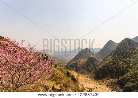 Blossom flower and mountain at north Vietnam