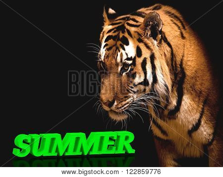 SUMMER bright green volume letter animall tiger on blac background