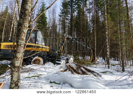 Woodworking in winter forest. Image of logger works