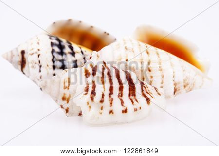 some sea shells isilated on white background, close up