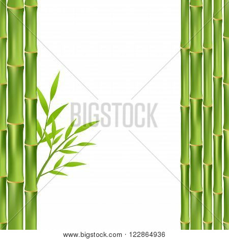 green bamboo frame isolated on white background. vector illustration