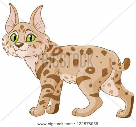 Illustration of cute bobcat