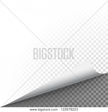 Paper corner peel. Page curled fold with shadow. Blank sheet of folded sticky paper note. Vector illustration sticker corner twisted up on transparent background.  poster