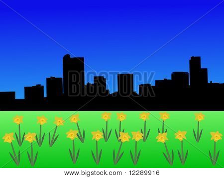 Denver skyline in spring with daffodils
