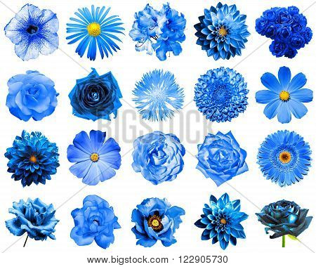Mix collage of natural and surreal blue flowers 20 in 1: peony dahlia primula aster daisy rose gerbera clove chrysanthemum cornflower flax pelargonium isolated on white