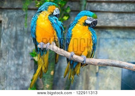 Portrait Of A Beautiful Pair Of Parrots On A Tree Branch