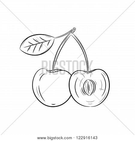 Vector hand drawn cherry illustration isolated on white background - stock vector