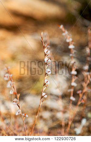 White  Flower In     Background