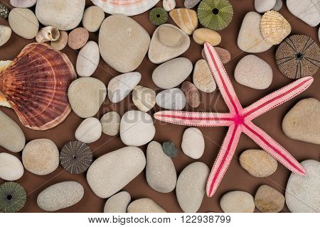 Seashell pebbles and red starfish for background