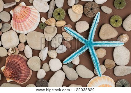 Seashell pebbles and blue starfish for background