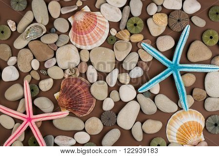 Seashell pebble and starfish for a  background