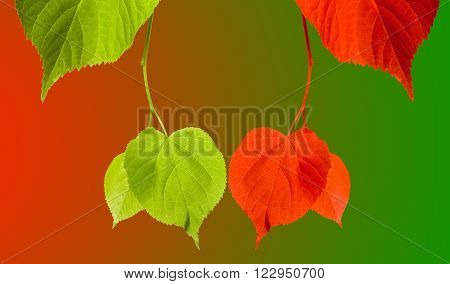 Red And Green Tilia Leaves On Multicolor Background