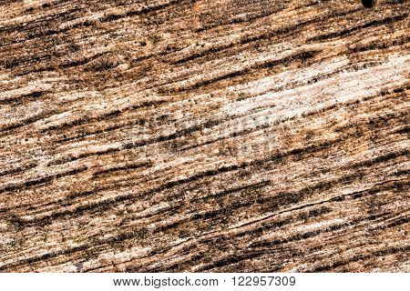Close up of old wood detail background