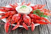Boiled red crayfishes with sauce of grated horseradish close-up poster