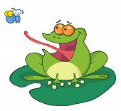 Frog On A Lilypad, Catching A Fly poster