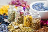 Bottles of healing herbs and mortar with dry lavender flowers herbal medicine. poster