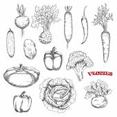 Broccoli and carrot, cabbage and cucumber, hot cayenne and sweet bell peppers, kohlrabi and potato, beet and radish, celery and pattypan squash vegetables sketches. Farming, cooking, agriculture theme poster