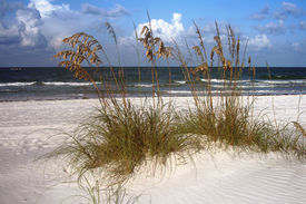 Sea Oats And Surf