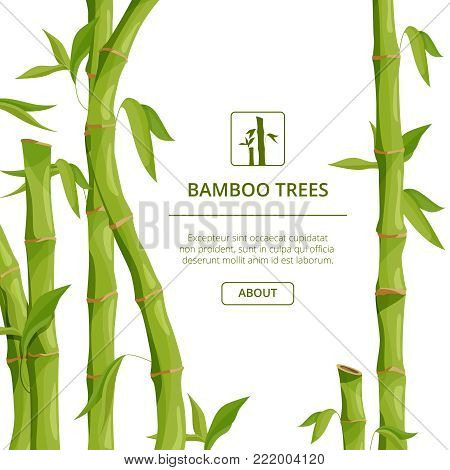 Eco background pictures with decorative illustrations of bamboo and place for your text. Bamboo decorative banner, stem organic fresh tropical plant vector