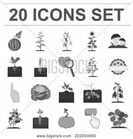 Plant, vegetable monochrome icons in set collection for design. Garden and harvest vector symbol stock  illustration.