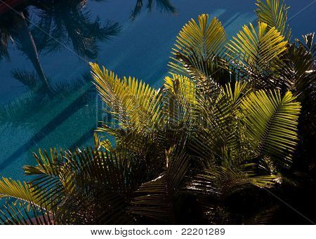 Tropical Plants By The Pool