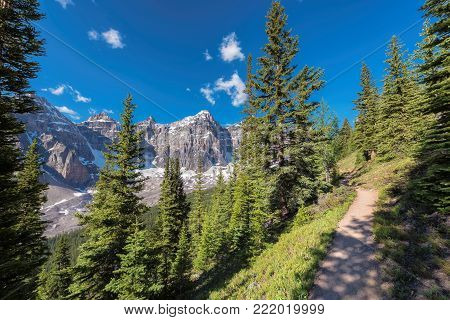 Hiking trail in Rocky Mountains with beautiful pine trees near Moraine lake, Banff National Park, Canada.