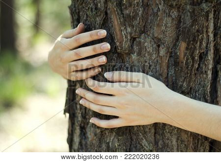 Close up of a woman's hands embracing tree with blurred forest in the background - environment protection concept