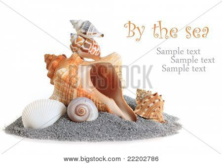 Isolated conch sea shell stack on sand.
