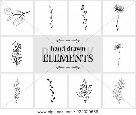 Hand drawn logo elements and icons. Hand drawn decorative vector elements with flower design. Cute flowers for your branding. This collection can be used for creating logos, business cards, postcards, wedding invitations
