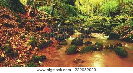 Magic forest stream creek in autumn with stones moss ferns and fallen leaves and tree
