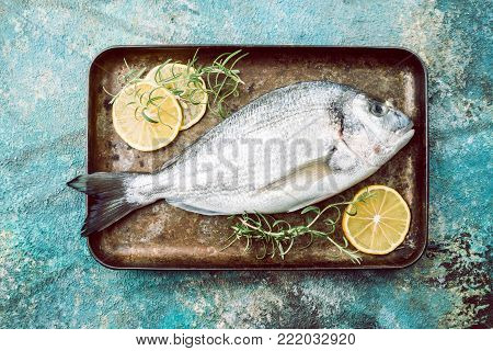 Fresh uncooked dorado or sea bream fish on tray with lemon slices and herbs over blue background, top view